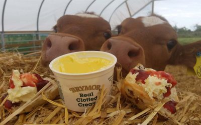 Brymor Ice Cream & cows