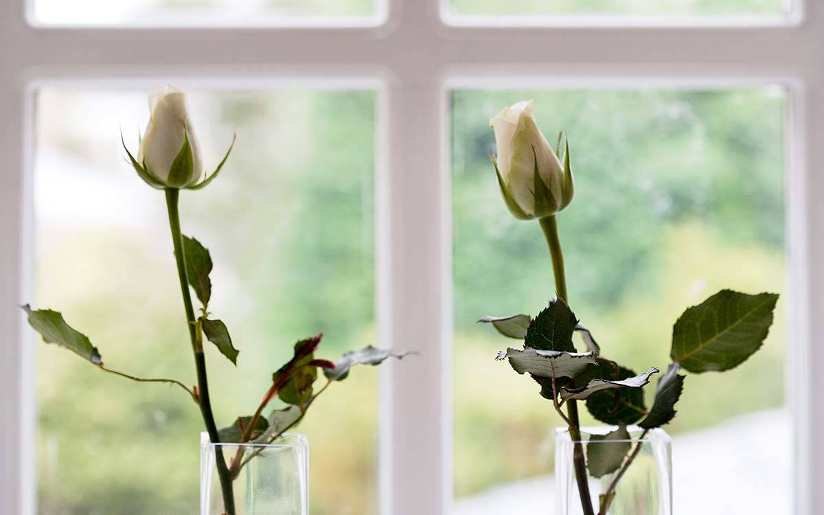 The Stable Block in Masham, Roses in the window