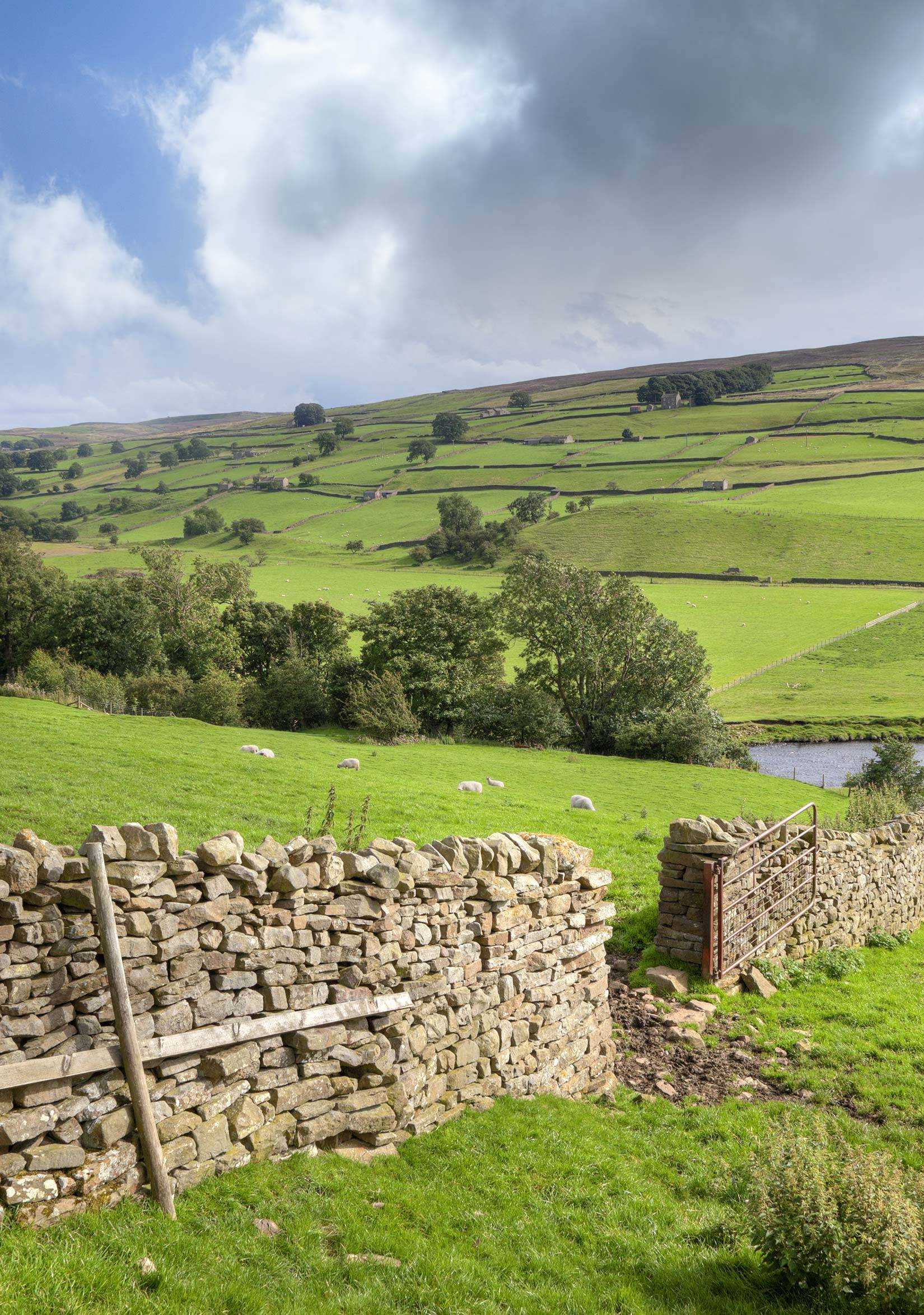 Yorkshire Dales drystone walling and open fields with sheep