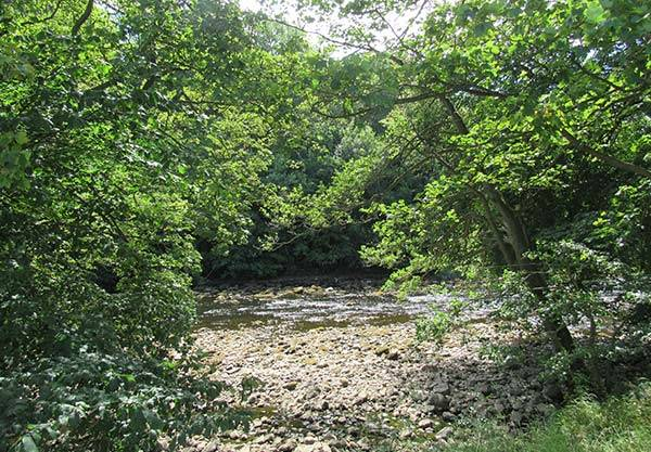 Trees and rocks on the riverbank of the River Ure in Masham
