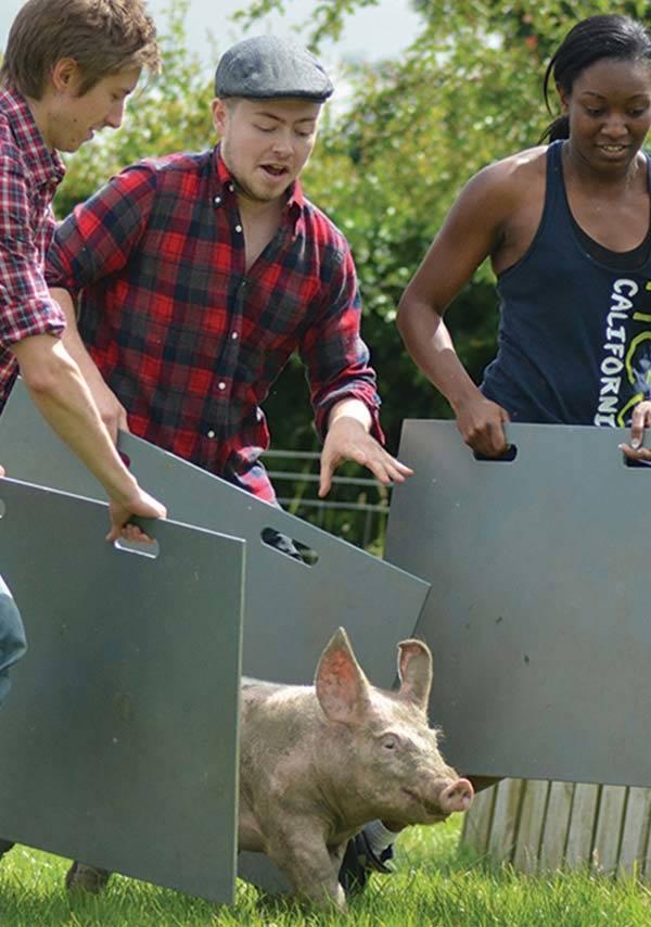 People pig herding at Farm Adventure in Ilton near Morton House in Masham